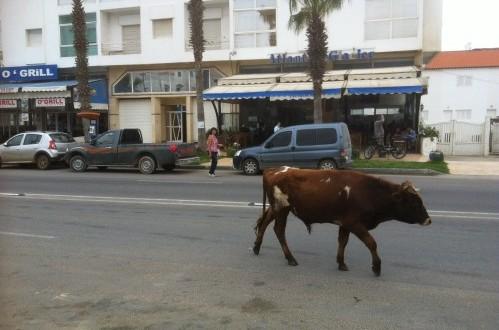 vache en ville