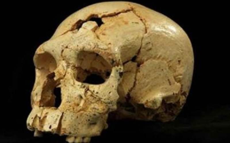 """الجمجمة كما وجدت في منطقة """"سيما دي لوس هويسوس"""" بإسبانيا"""
