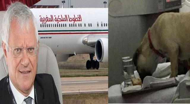 زوجة-مدير-بنك-مغربي-وكلب-وراء-إقالة-بنهيمة-من-الخطوط-الملكية-المغربية