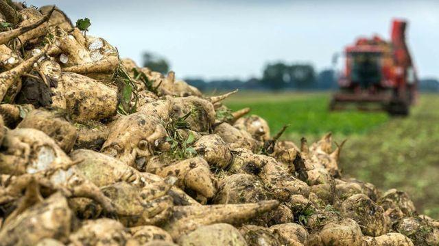 Photo of الزراعات السكرية بالغرب تسجل إنتاجا قياسيا ناهز 1,2 مليون طن