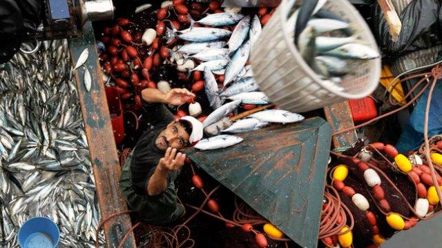 Photo of البرلمان الأوروبي يصوت لصالح تجديد اتفاق الصيد البحري مع المغرب