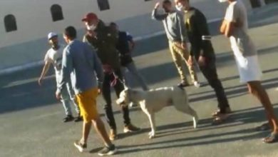 Photo of ابن شرطي يهاجم الشرطة باستعمال كلب