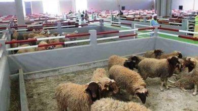 """Photo of سوق الماشية في العيون """"الأحسن إفريقيا"""""""