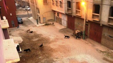 Photo of صورة وتعليق | غزوة الكلاب في بلاد تينمل !